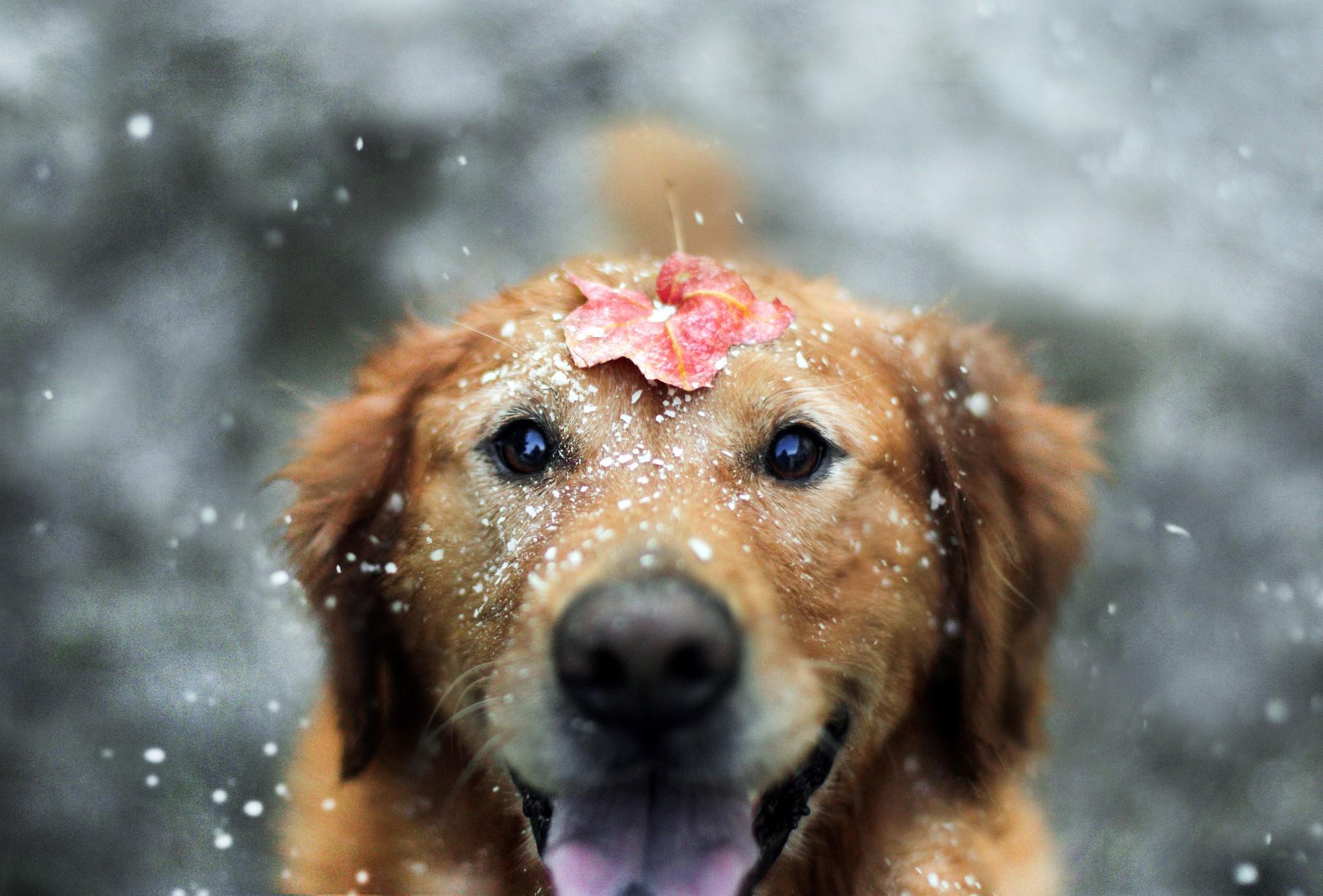 Портрет собаки с эффектом боке